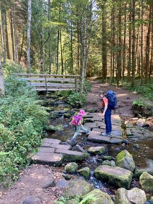Folgt man dem Seensteig anstelle des Forstwegs hat man viel Spaß