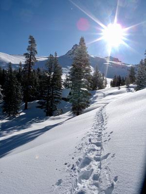 Und los gehts, tiefer frischer Schnee und Sonnenschein