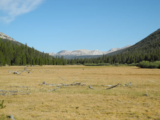 Der Blick Richtung Tuolumne Meadows noch über 10 Kilometer entfernt.