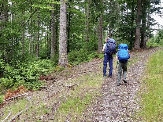 Ab der markierte Abzweigung via einem Naturweg zum Camp