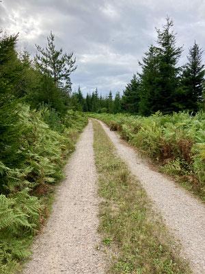 Die meiste Zeit jedoch folgten wir breiten Forstwegen