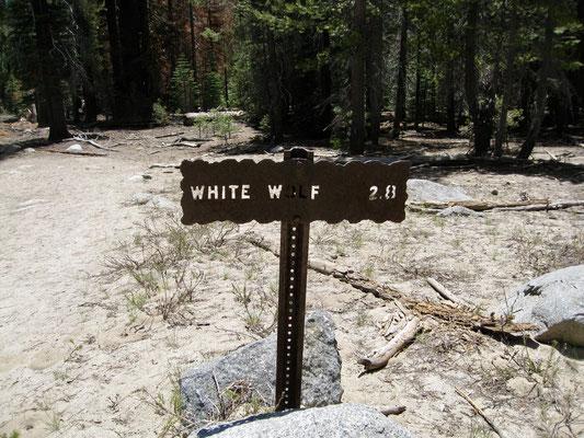 Endspurt White Wolf