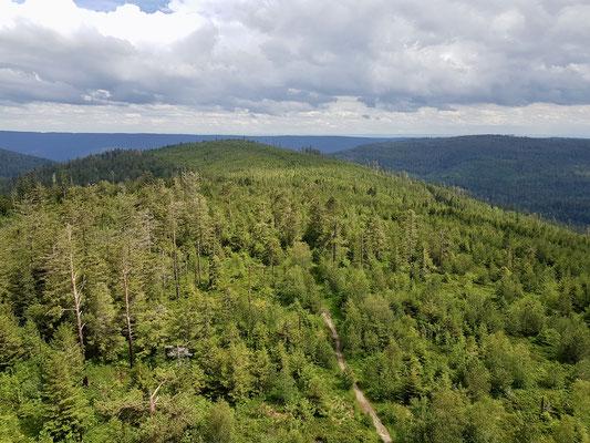Blick vom Turm auf den Schwarzwald