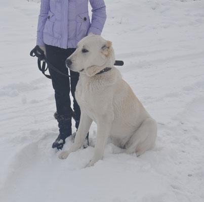 Зар Хакан Звезда Сибири, 1 год