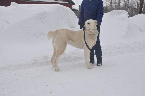Зар Хакан Звезда Сибири, 1 год 4 месяца
