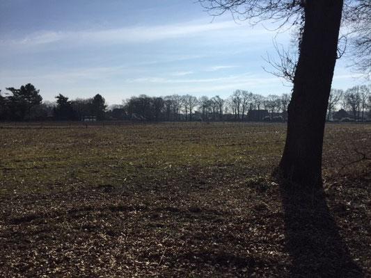 Ixy vom Haus Ehrlich - Speuren 14 maart 2016 - foto van het speurveld