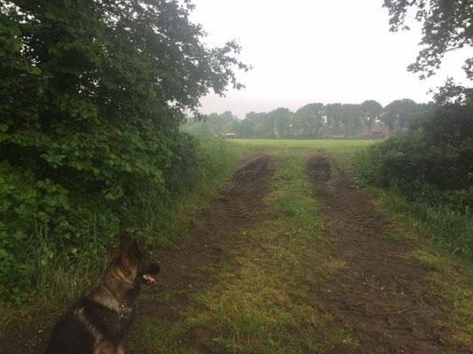 Ixy bij een speurweide. Op de achtergrond de actieve boer.