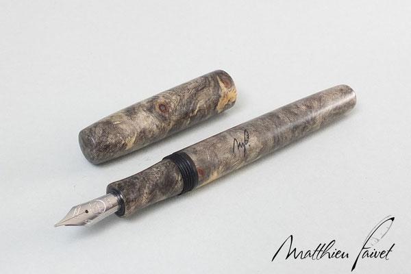 Loupe de Marronnier d'Amérique, plume Bock acier