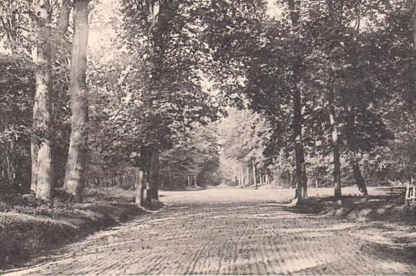 Piste d'entrainement dans les années 60 en forêt à Maisons-Laffitte