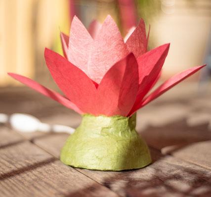 Lotusblume pink