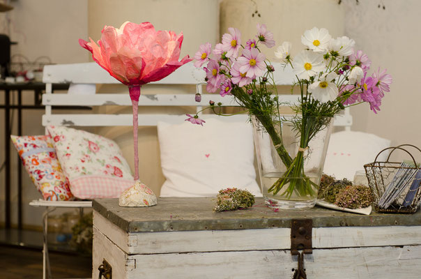Cosmea rosa/pink