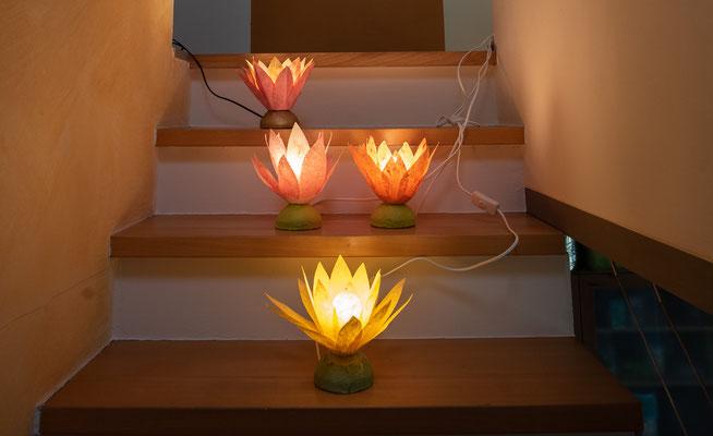 verschiedene Lotusblumen