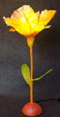 Mohnblume gelb-orange