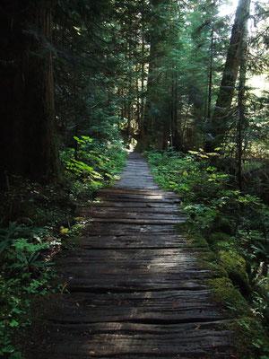 Wooden bridge on the Wonderland Trail