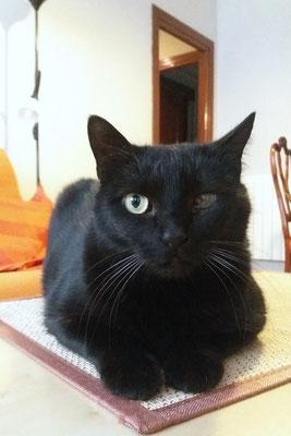 BOGART, 8 años, es comilón, cariñosísimo, mimoso, un Amor y convive con BUBÚ.