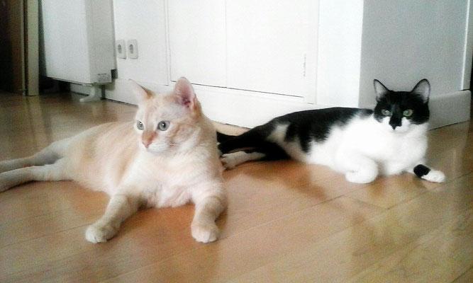 LULA (izq.), 5 años y XULÍN (dch.), 5 años, son amorosos, cariñosos, mimosos, lindísimos.