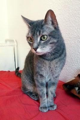 RUNA, 10 años, forma parte de una gran familia junto con SOMA, NEO, KISSA Y KATU. Runa es pequeña y fina, no aparenta su edad. Es dulce, cariñosa y muy juguetona.