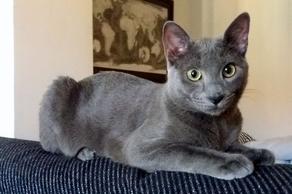 RUFINO, 8 meses, vive con WHISKY (ver en 2016). Al principio es algo tímido y se esconde, pero después ya se relaja y es muy cariñoso y juguetón.