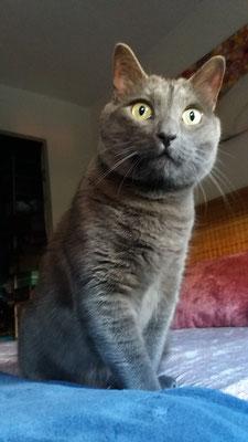 JORGE, 7 años, es encantador,  muy cariñoso y mimoso, además de juguetón.