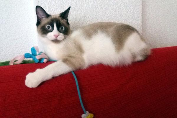 LUNA, 7 meses, charlatana, juguetona, mimosa, cariñosísima.