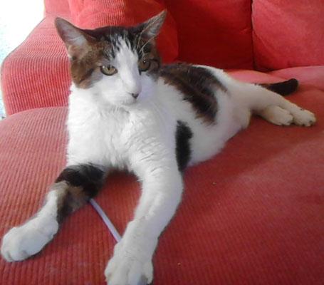 WIDY, 15 años, muy cariñoso y le gusta jugar con pajitas.