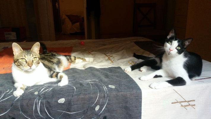 MUSE (izq.) 3 años y TINA (1 año), ambos muy cariñosos, mimosos, juguetones y charlatanes