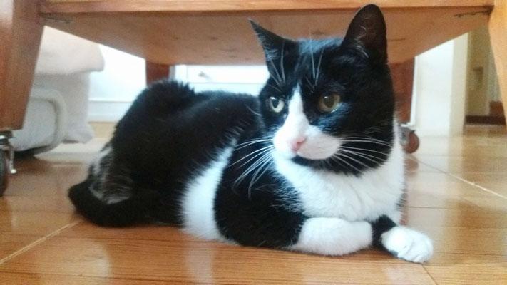 PELUSAS, 17 años, es tranquila y muy cariñosa.