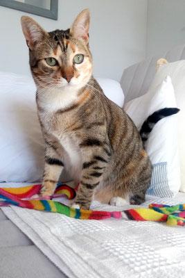 ELSA, 2 años, vive con Tigrilla y Cleo, es viva, juguetona, muy cariñosa. Los tres forman una fantástica familia.