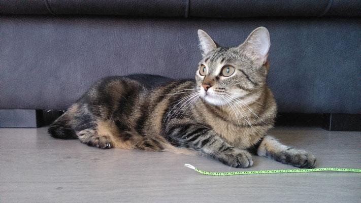 LISA, una gata pequeña, algo asustadiza, pero que enseguida cogió confianza y se puso a jugar y cariñosa ¡Una preciosidad!