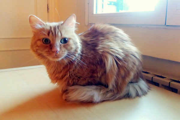 SIMÓN, 5 años, vive con LULA. Es muuuyyy tímido, pero después de trabajar con él, consiguió confiar y dejar de lado esa timidez y ahí es cuando descubres a un gato muy dulce, tierno, buemo, otro Amor!
