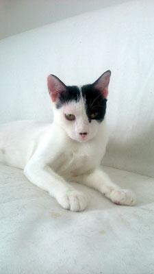 LEVY, 7 meses, tímido, pero rápidamente pierde la vergüenza, es juguetón, un tragoncete y un amor. Adora a SCOTT.