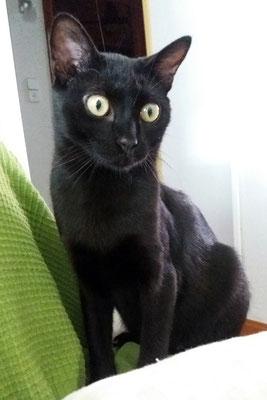 BROWNIE, 7 meses, vive con CHATI. Es, es... tremendo de charlatán, mimoso, cariñoso y muy muy juguetón y se mete con Chati jejeje que tiene una paciencia :).