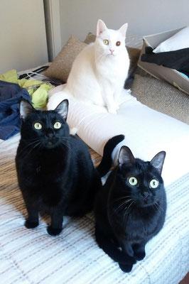 LUNA (arriba blanca) 10 años, TARAY (Izq.) 10 años y DORA (Dch.) 3 años, las tres son increíbles :), muy juguetonas, cariñosas y mimosas.
