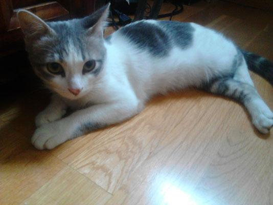 GOKU, 5 meses, es muy cariñoso se puede pasar horas ronroneando. Vive con Kira.