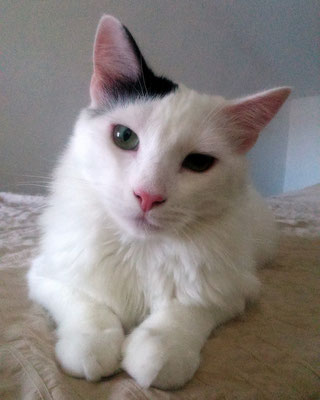 SCOTT, 8 meses, cariñoso y quiere con locura a LEVY.