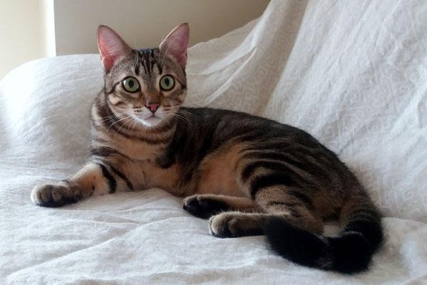 TRES, 1 año, vive con SLOW. Un poco tímido al principio, pero cuando ya confía, es muy cariñoso y muy juguetón.