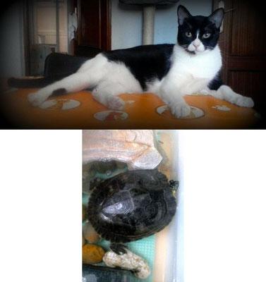NANUK, 1 año, cariñoso hasta decir basta, un amor y TATI, la tortuga.