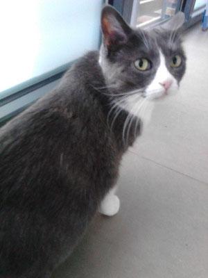 CHIPI, 13 años, muy cariñosa.