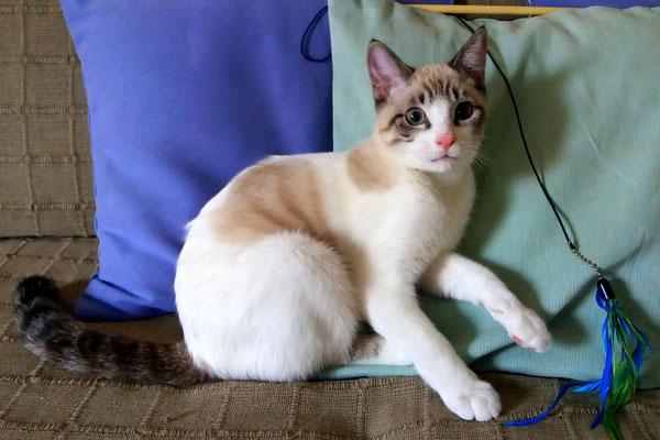 LOKI, 5 meses, vive con PEKE. Es un torbellino incansable y cariñoso.