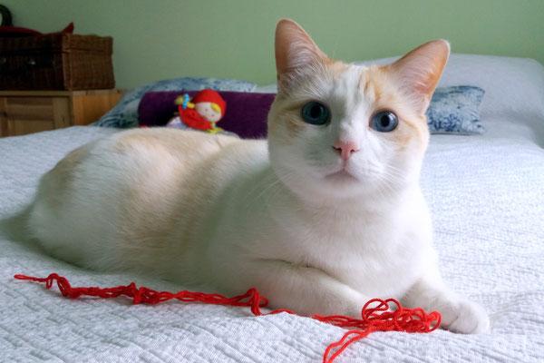 BILBO, 3 años, vive con FREYJA. Es muy juguetón, cariñoso y divertido.