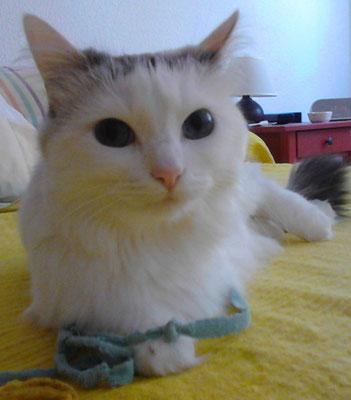 DUNKA, 5 años, es muy cariñosa y preciosa.