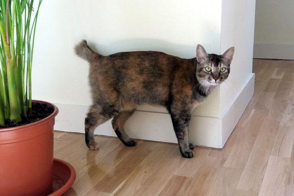 GULAB, 2 años, una gata muy miedosa, que se esconde, pero en cuanto se le pasa, es muuuyyyy dulce, amorosa y cariñosa.