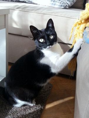 JACKY, 4 años, vive con NUKA, son hermanos. Muy tímida al principio, se esconde, pero después de conocerte, es curioso y muy juguetón.