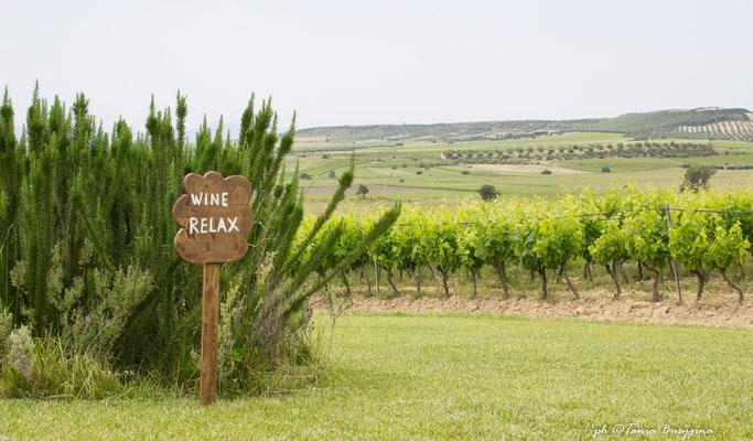 винодельни Сардиния