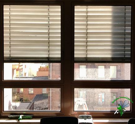Meixner Fensterputzer Bürofenster