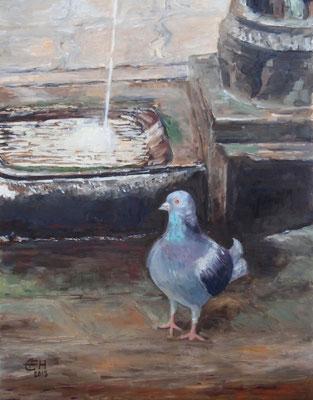Taube in Venedig,Öl-Holz,51x40cm