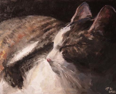 Schlafende Katze, Öl_lwd. 40x50cm