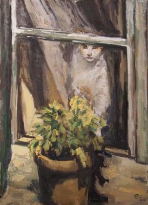 Katze am Fenster   Öl_Lwd. 50x70cm