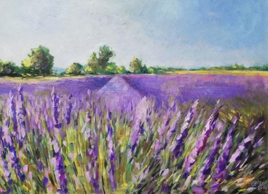 Luberon,Lavendefeld  Öl_Lwd.50x70cm