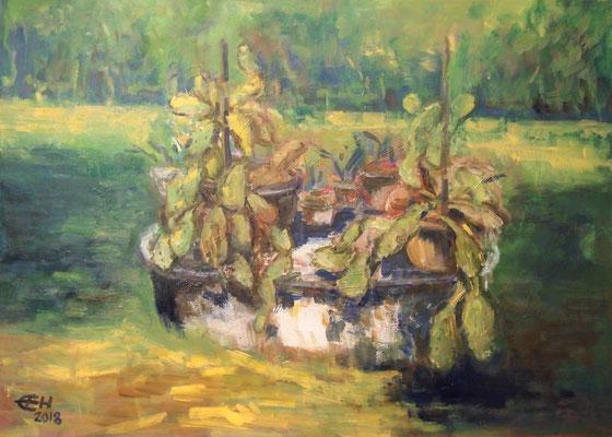 Cactuses At The Old Well, Öl_Lwd. 50x70cm